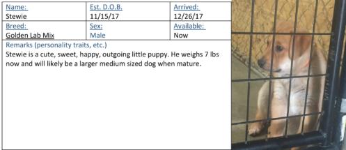 Stewie adoption card